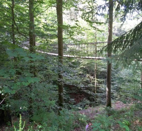 Kleine Wanderung zur Hängebrücke über Rothaarsteig und Rothaarweg